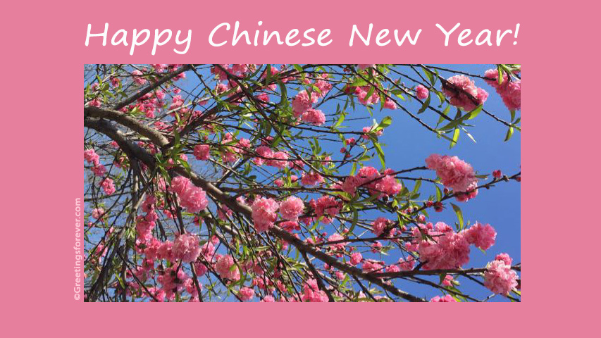 Ecard - Happy chinese new year message