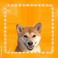 Perro sonriente Shiba Inu