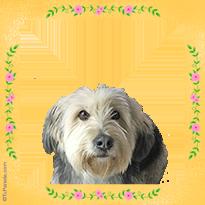 Perro simpático Bearded Collie