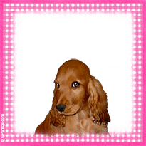 Pequeño Cocker Spaniel