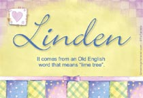 Name Linden