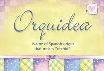 Name Orquidea