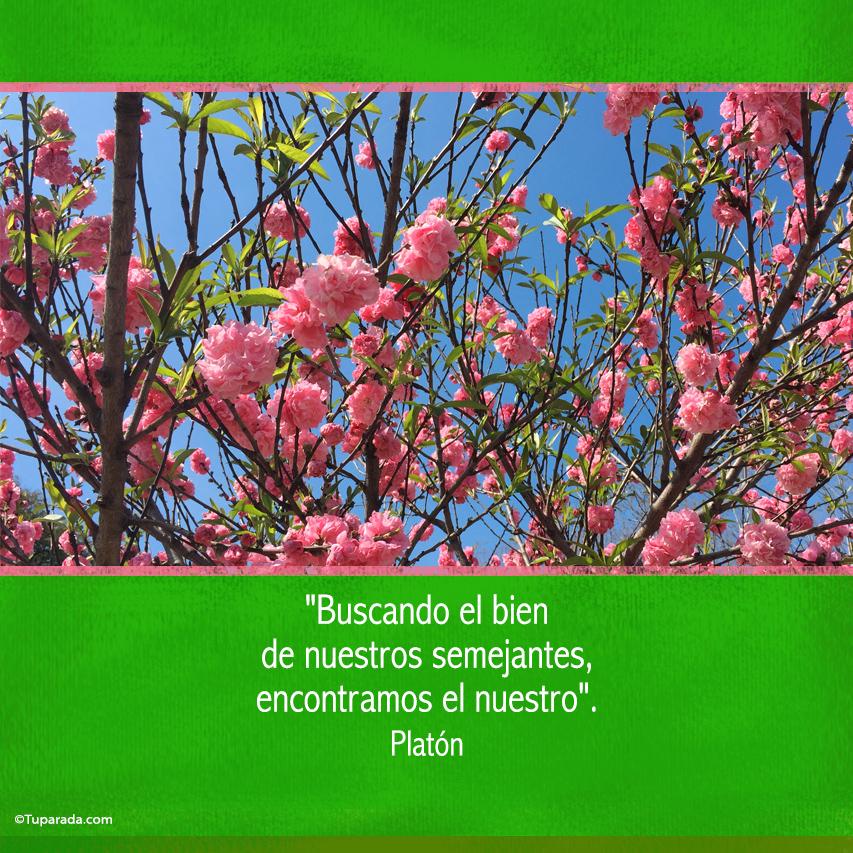 Tarjeta - El bien - De Platón