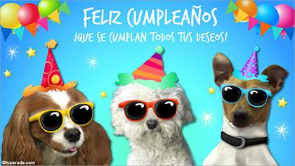 Tarjeta animada de festejo de cumpleaños con video de perritos.